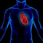 Какой врач лечит сердце
